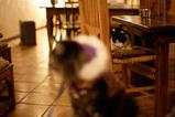 Sandia Cat