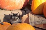 Halloween 2006_4