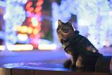SPY CAT_4