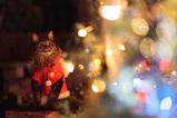 May Christmas_1
