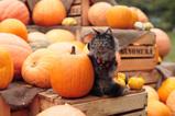 Halloween_2007_1