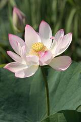 Lotus 2006_01