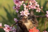 猫自慢_1