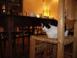 Sandia CAFE_01