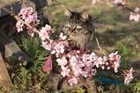 桃の花とMAY