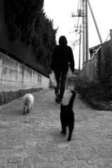 Cats Street
