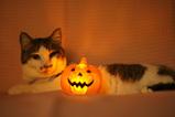 PuPu Pumpkin