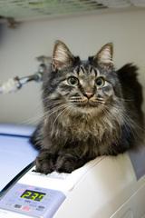 猫型お洗濯モニター
