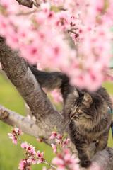 猫自慢_2