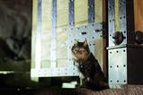 SPY CAT_1