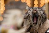 MGR Cat_2