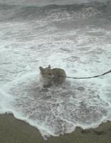 海でおおはしゃぎ!①