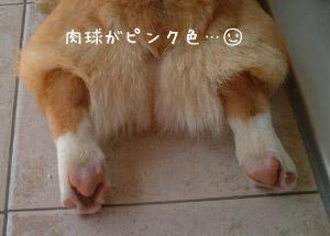 ピンクの肉球(*´∇`*)