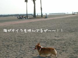 須磨・ハク