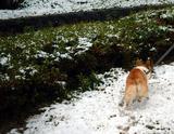 雪の中のハクちゃん2