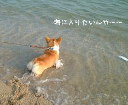 海に入りたいよ~~(ハク)
