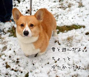 雪の中のハクちゃん