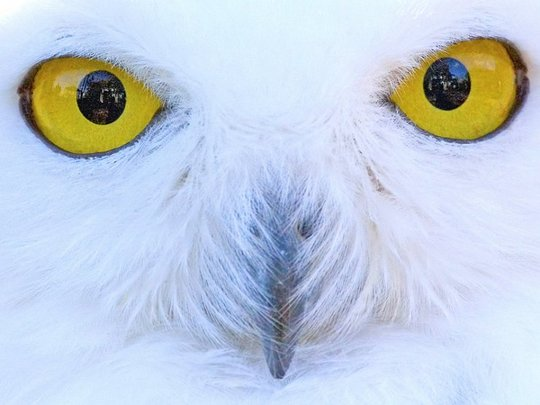 08_owl_63979