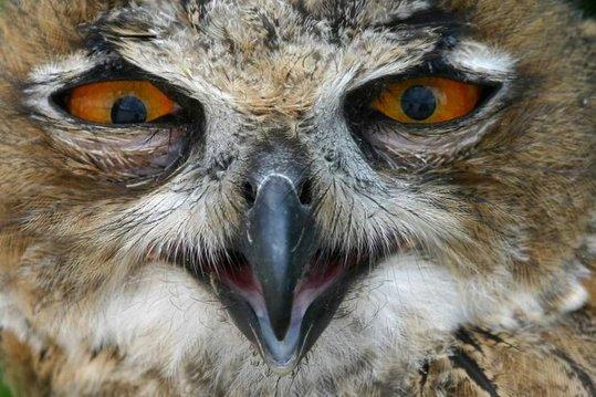 09_owl_95133