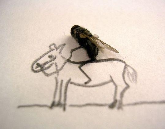 dead_flies_04