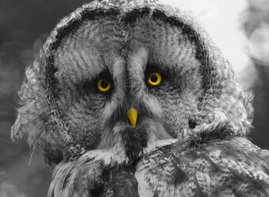 18_owl_80548