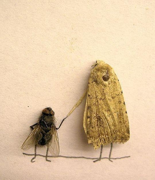 dead_flies_13