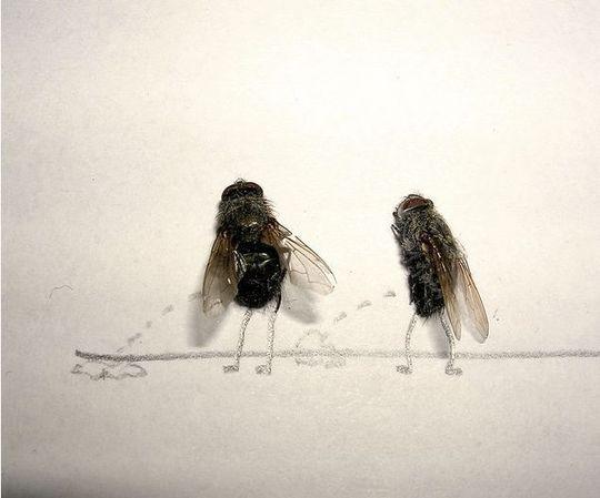 dead_flies_02