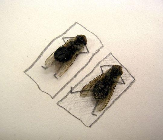 dead_flies_03