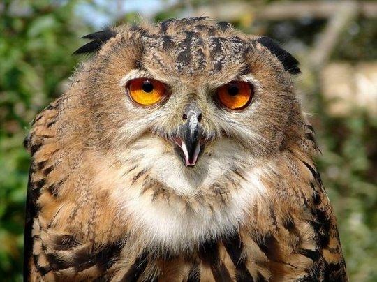 12_owl_105600