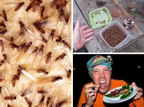termites-ants-and-mopani1