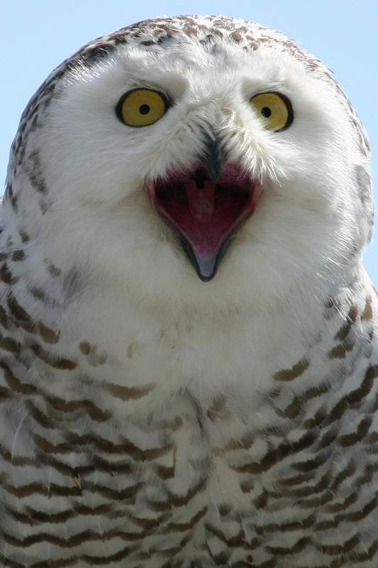 10_owl_54977