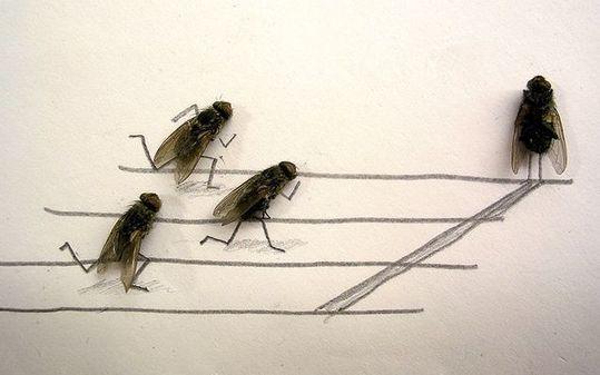 dead_flies_01