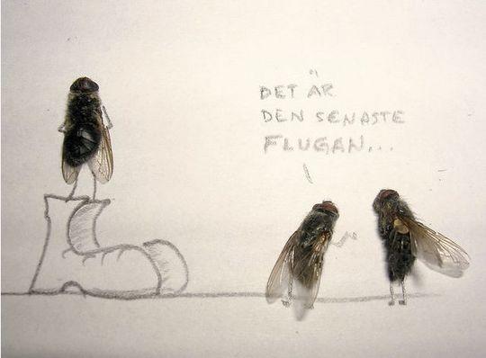 dead_flies_10