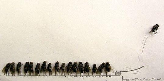 dead_flies_06