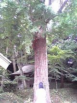 木の前のミコ