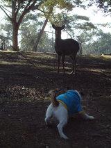 鹿との遭遇