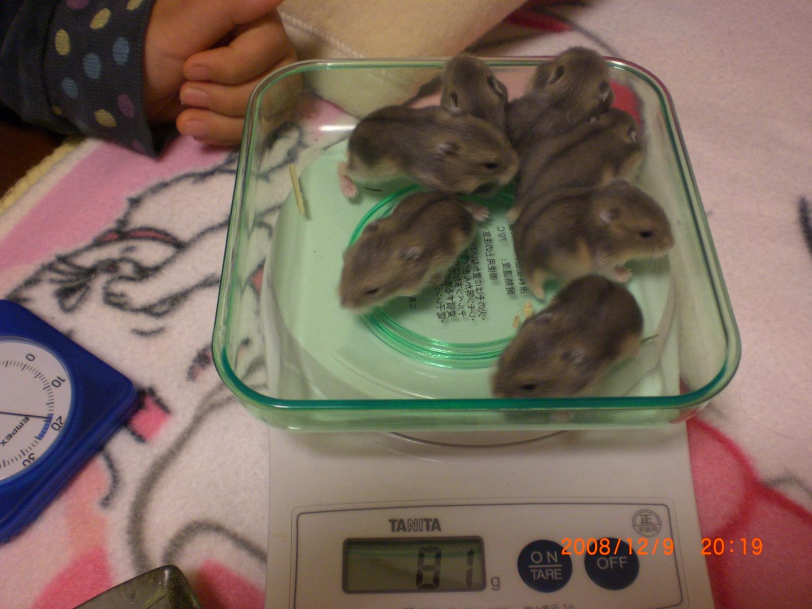 赤ちゃんハム's 体重測定
