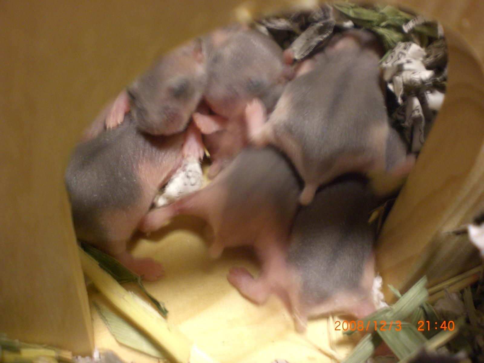 赤ちゃんハム's