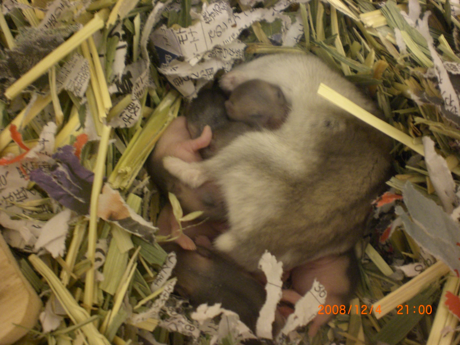 ハナママ&赤ちゃんハム's