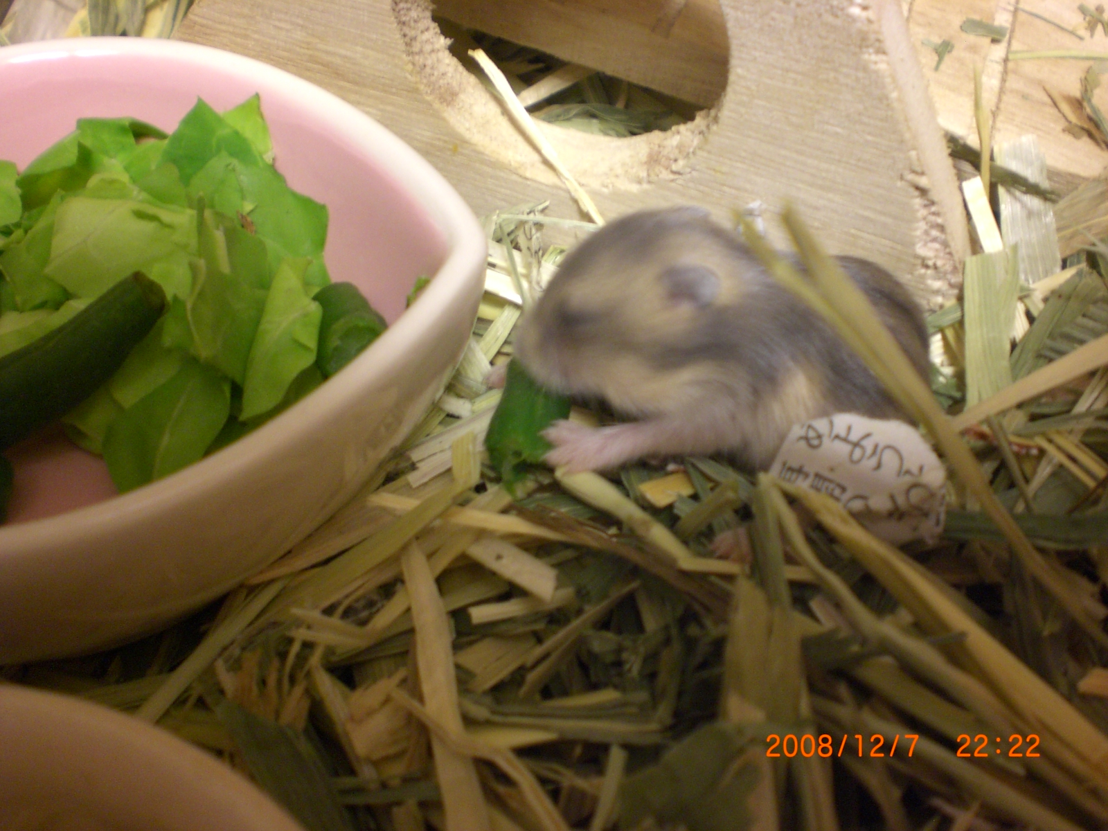 赤ちゃんハムとインゲン