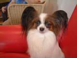 doglike3