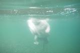Tちゃん水中1