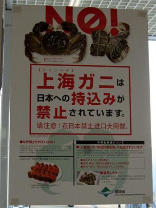 上海ガニの日本への持ち込み禁止ポスター。