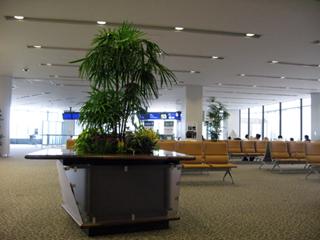 中国・成田発浦東空港行きの全日空NH959便