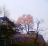 不来方城(岩手公園)200/04/29 a.m.6:30
