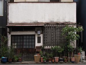 Tokyo Plant Pots (YaNeSen001) 東京植木鉢
