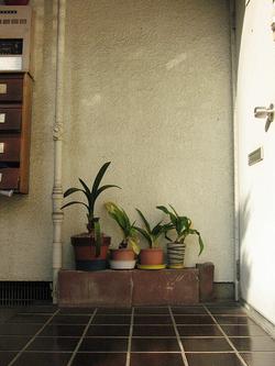 Tokyo Plant Pots 東京植木鉢計画 on Flickr
