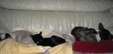 三匹の昼寝
