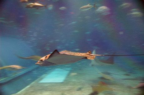 美ら海 魚3