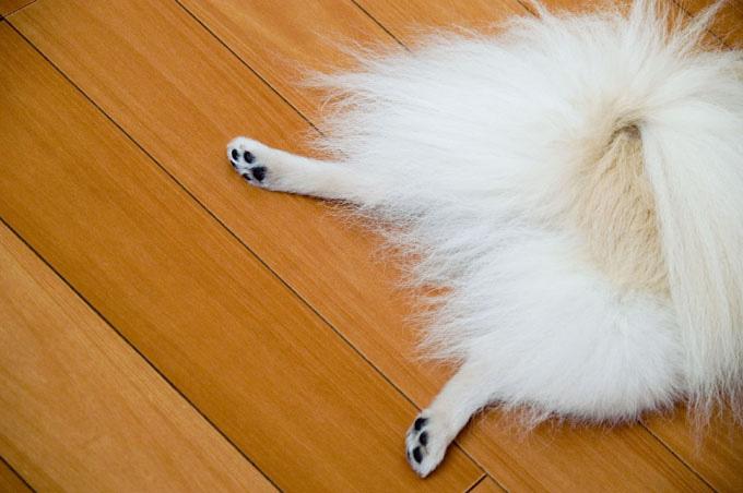 リリィペタン脚